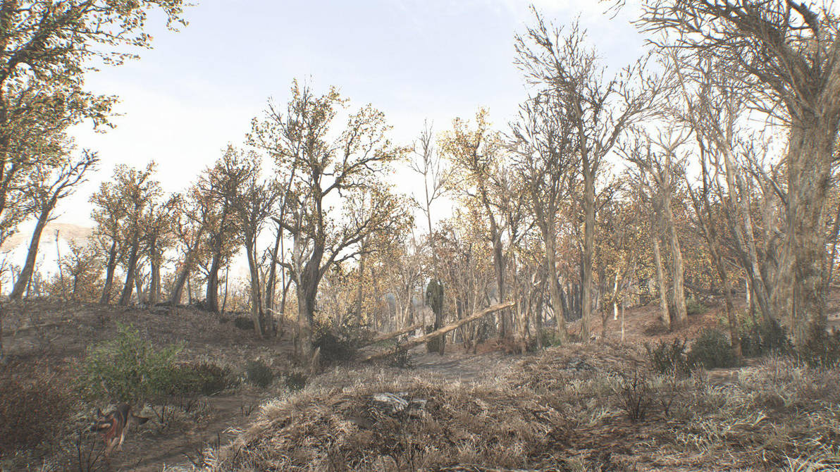 Three meshes, twelve textures, one ENB - new game by WarMocK