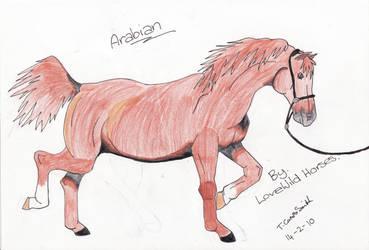 Chestnut Arabian by LoveWildHorses