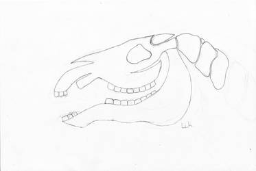 Horse Head Skull by LoveWildHorses
