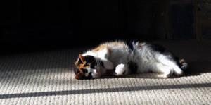 sunbather by awjay