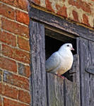 home bird by awjay