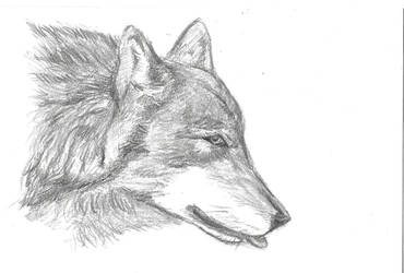 Wolf in Beijing Zoo (2) by snowkylin