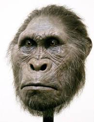 Australopithecus by schellstudio