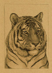 Tiger 5x7in by DelusionalPuffball
