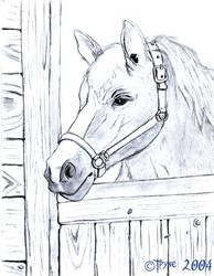 Horse at the stable by hbrika