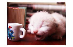Drunk Kitten by DxButterfly