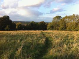 Grasslands by MrEvil37
