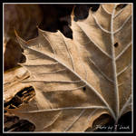 Veins of Life by tleach0608