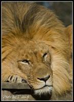 Lazing Around by tleach0608