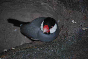 java sparrow 1.1 by meihua-stock