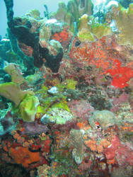 coral reef 2.6 by meihua-stock