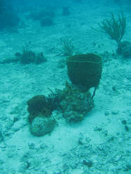 coral reef 2.7 - sea sponge by meihua-stock