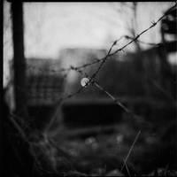 X by Branimir