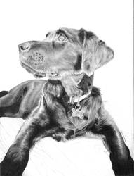 Black Dog by Mzata