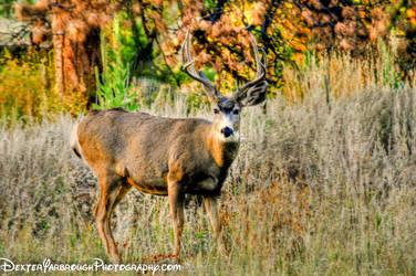 Original Deer Stare by brodex1965