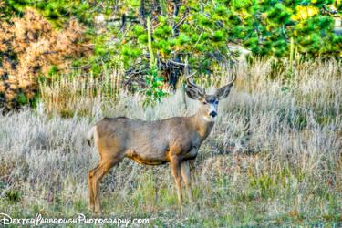 Deer Buck on Alert by brodex1965