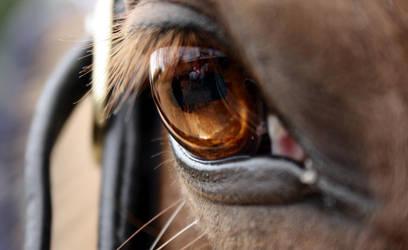 Amber Eye II by silhouette-equus