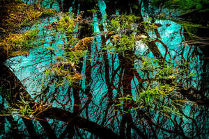 Swamp by ryder68