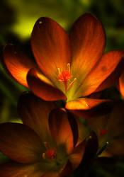 Fire-flower by etheraiel
