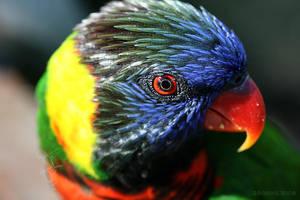 Why I Fear Birds II by CatharsisJB