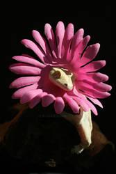 Pretty Flower by CatharsisJB
