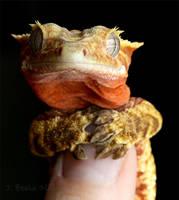 Gecko Yoda by CatharsisJB