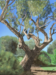 River Red Gum by oldlofty