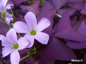 Purple Weed. by cerulean88