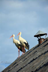 Gossiping on rooftop by renchh