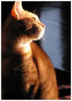 kitten in the morning 2 by ShadowsGrnEyes
