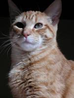 cat portrait 2 by ShadowsGrnEyes