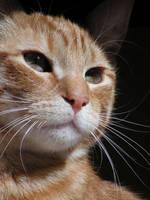 cat portrait 3 by ShadowsGrnEyes