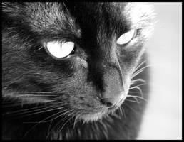 black cat by ShadowsGrnEyes