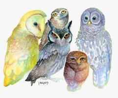 Rainbow Owls by JMagnus