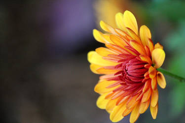 Yellow-Orange Flower by RadioactiveFlowers