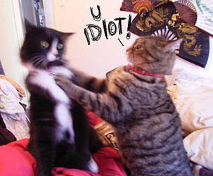 here kitty kitty by sooj