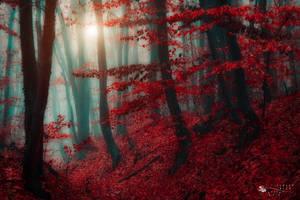 land of elves by ildiko-neer