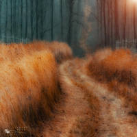 gold of grass by ildiko-neer