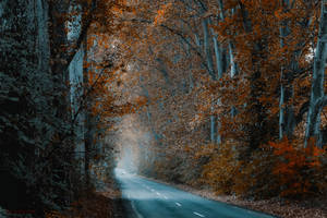 tunnel by ildiko-neer