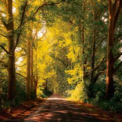 gate of leaves by ildiko-neer