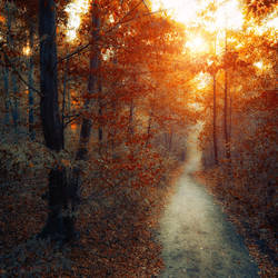 you are gold by ildiko-neer