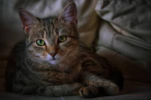 lady on the sofa by ildiko-neer