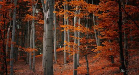 Wonder Fall by ildiko-neer