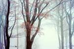 Winter Queen by ildiko-neer