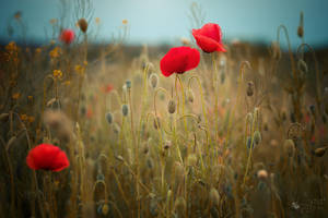 Almost Summer by ildiko-neer