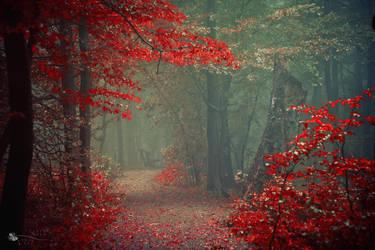 Geisha Path by ildiko-neer