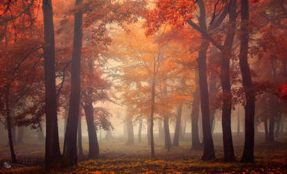 Tree Fairy by ildiko-neer