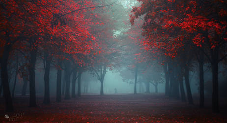 Coming Out by ildiko-neer