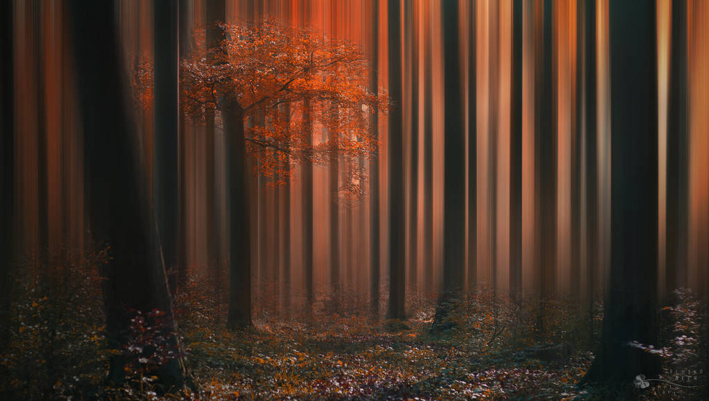 Besides Me by ildiko-neer