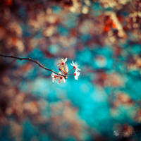 Shake hands with Spring by ildiko-neer